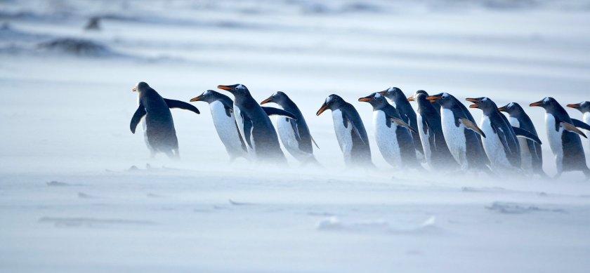 penguins-leader-1940x900_34162